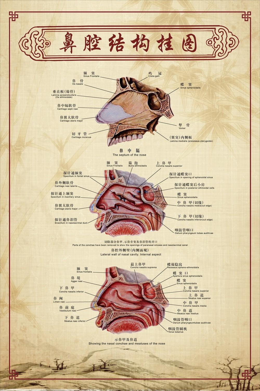 鼻腔结构图